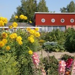 Aspegrenin puutarha. Kuva: Mikael Enlund, 2006.